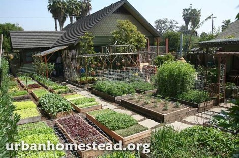 urban-homestead-urban-farm-small-farm
